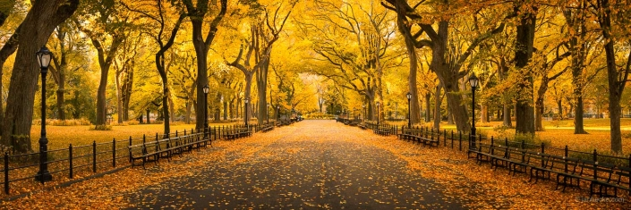 The mall in Central Park during autumn season, New York City, USA