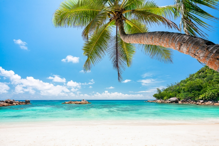 Beautiful beach with white sand and palm tree on the Seychelles