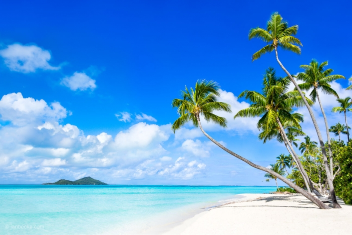 Beautiful beach with palm trees and white sand on the Bora Bora atoll, French Polynesia