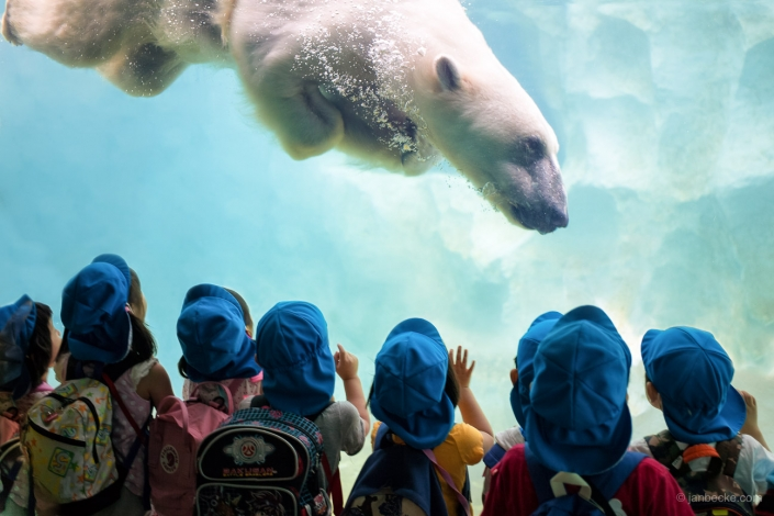 Group of young kindergarten kids watching a polar bear diving at the Ueno Zoo in Tokyo