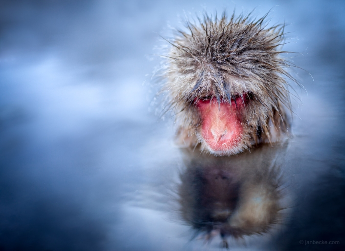 Snow monkey sitting in a hot spring at the Jigokudani Snow Monkey Park in Japan