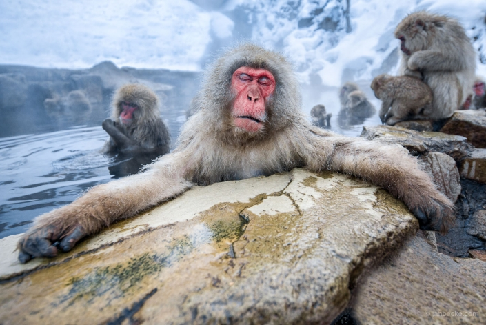 Japanese macaques relaxing in a hot spring at the Jigokudani Snow Monkey Park in Yamanouchi, Japan