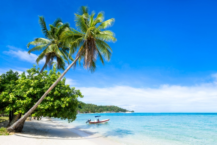 Tropical beach with palm trees and boat on Bora Bora