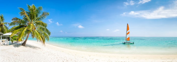 Tropical beach panorama with white sand and palm tree