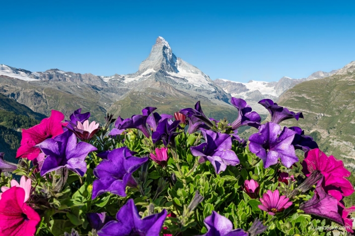 Matterhorn mountain in the Swiss Alps during spring season with flowers
